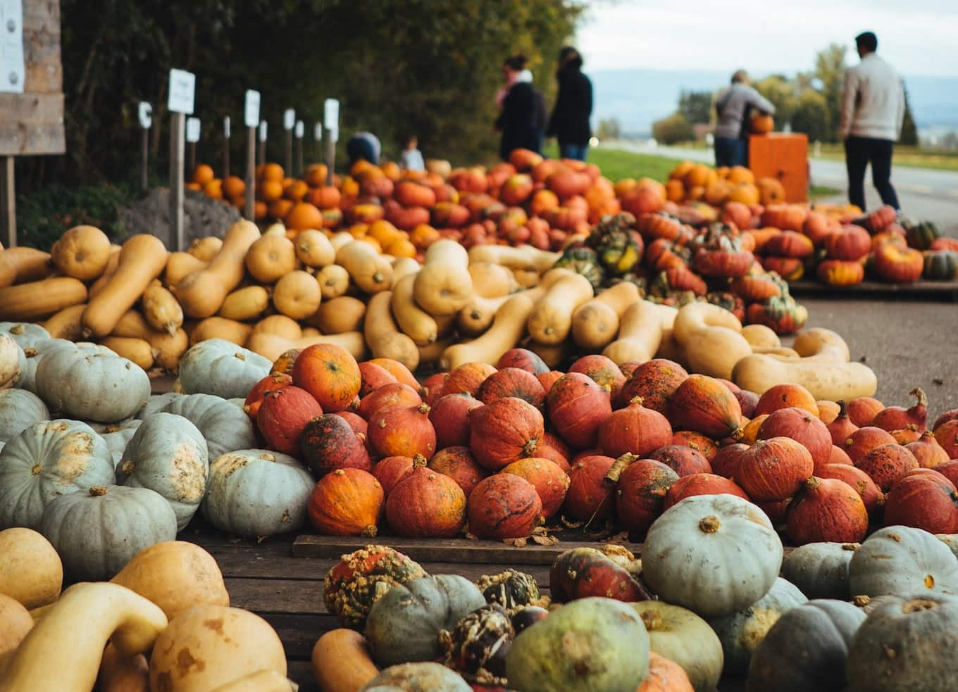 Piles of small pumpkins and gourds