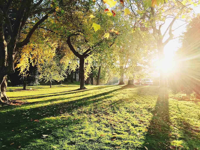 Sun shining through trees